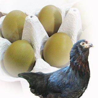 黒翡翠鶏(くろひすいどり) 24個入り