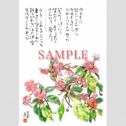 <img class='new_mark_img1' src='https://img.shop-pro.jp/img/new/icons31.gif' style='border:none;display:inline;margin:0px;padding:0px;width:auto;' />4221 絵はがき5枚組 日日草