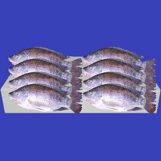 CLEANED TILAPIA (M) 400-500g 1case 8Kg