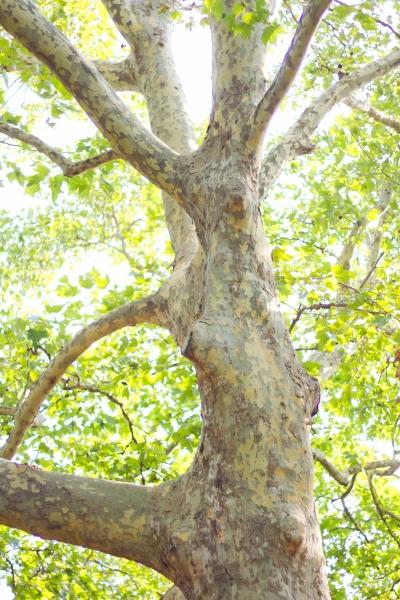 木が「あったかい」とは・・・?