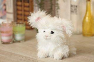 ふわふわの子ウサギ(アンゴラ)