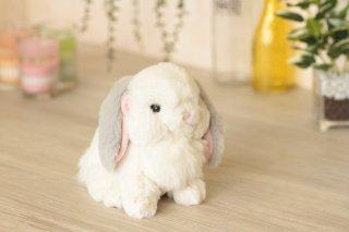 ふわふわの子ウサギ(ロップイヤーグレー)