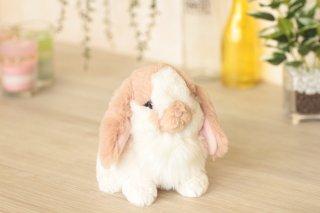 ふわふわの子ウサギ(ロップイヤーベージュ)