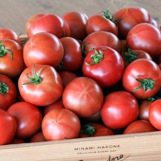 【糖度7】丹那高原トマト