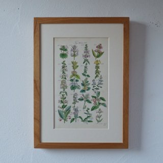 <img class='new_mark_img1' src='//img.shop-pro.jp/img/new/icons14.gif' style='border:none;display:inline;margin:0px;padding:0px;width:auto;' />BOTANICAL ART