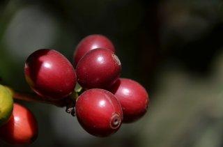グァテマラ アンティグア地区 ラ・ホヤ農園 【超高地産ブルボン種100%】 200g〈フレンチロースト/深煎り〉