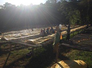 【NEW】エチオピア ジンマ地区 フンダ・オリステーション【ウォッシュト/水洗式】200g〈シティロースト/中深煎り〉