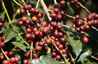 グァテマラ アンティグア地区 ラ・トラベシア農園 ブルボン種100% 200g〈ミディアムロースト/中煎り〉