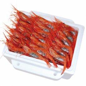 日本海産 甘エビ 50尾