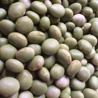 中川吉右衛門大豆|2020年産 自然栽培秘伝豆