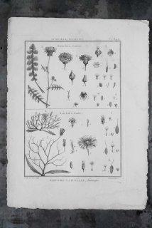 Histoire Naturelle  649