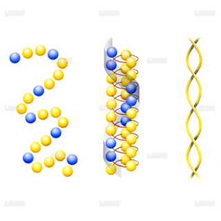 コイルドコイル(レンサ球菌Mタンパク質)(Sサイズ)