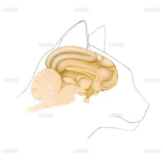 猫の脳(Sサイズ)