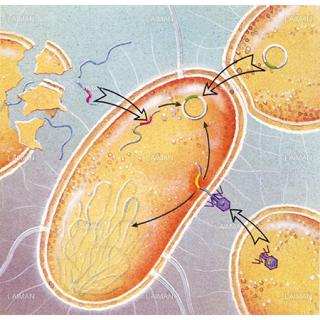 細菌の耐性遺伝子獲得(Mサイズ)