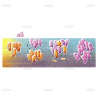 薬剤感受性細菌の保護(Mサイズ)