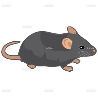 マウス(黒系)(Sサイズ)