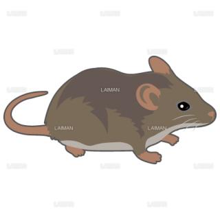 マウス(茶系)(Sサイズ)
