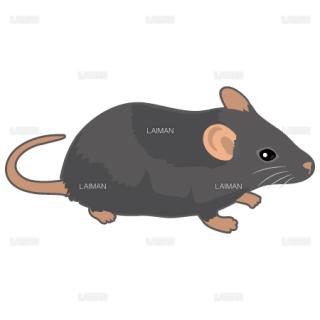 マウス(黒系)(Mサイズ)