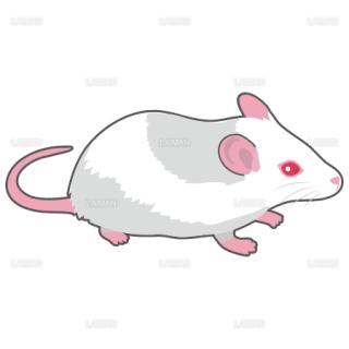 マウス(アルビノ系)(Mサイズ)