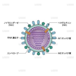 インフルエンザウィルス(構造・文字あり)(Sサイズ)