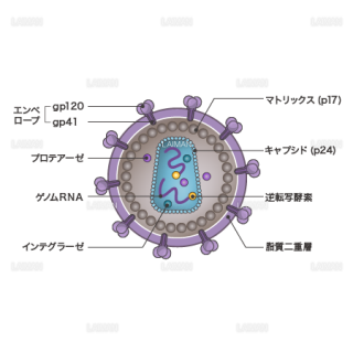 HIVウィルス(構造・文字なし)(Sサイズ)