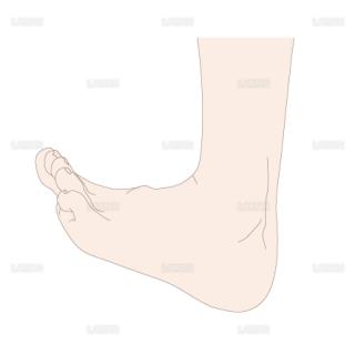 足の背屈 側面(Sサイズ)