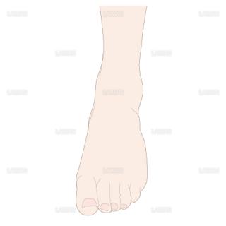 足の底屈 前面(Sサイズ)