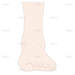 足の基本体位 前面(Sサイズ)