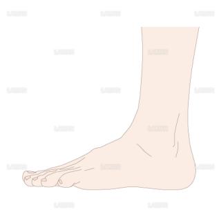 足の基本体位 側面(Sサイズ)