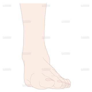 足の外転 前面(Sサイズ)