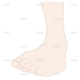 足の内転 前面(Sサイズ)
