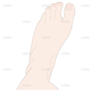 足の内転 上面(Sサイズ)