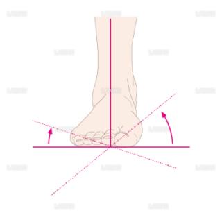 下肢(足部)の外返しと内返し(Sサイズ)