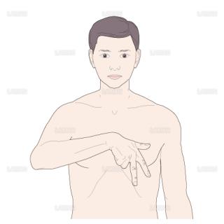 心臓の刺戟伝導体の方向(Sサイズ)