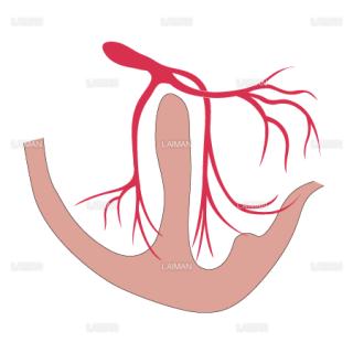 心臓の刺戟伝導体(Sサイズ)
