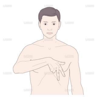 心臓の刺戟伝導体の方向(Mサイズ)