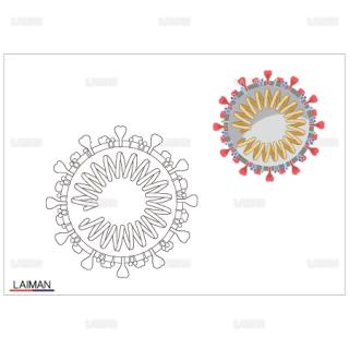 <塗り絵>新型コロナウイルス(SARS-CoV-2)の構造_断面