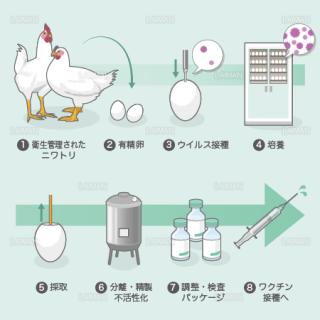 ワクチンの製造(ふ化鶏卵培養法) (Sサイズ)