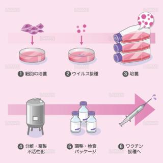 ワクチンの製造(細胞培養法) (Sサイズ)