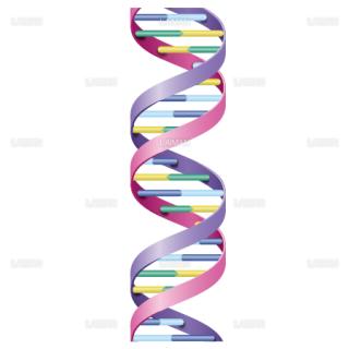 DNAの構造 (Mサイズ)