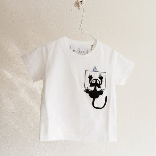 Animal series KID_CAT