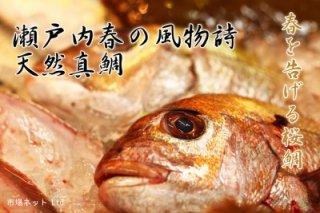 瀬戸内天然真鯛(桜鯛)
