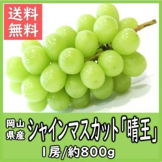 ◆送料無料◆岡山県産シャインマスカット「晴王」 秀品 露地物 1房/約800g