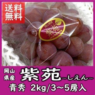 ◆送料無料◆岡山の冬葡萄「紫苑(しえん)」  青秀 2�/3〜5房(房数指定不可)