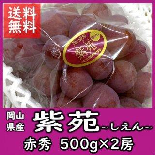◆送料無料◆岡山の冬葡萄「紫苑(しえん)」  赤秀 500g×2房