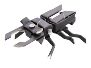 Stag beetle「クワガタムシ」<img class='new_mark_img2' src='https://img.shop-pro.jp/img/new/icons34.gif' style='border:none;display:inline;margin:0px;padding:0px;width:auto;' />