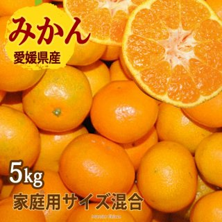 みかん 5kg サイズ混合 可品 愛媛 一部地域送料無料