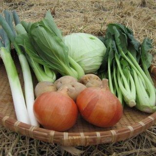 野菜セット6種類 マルシェ愛媛 産地直送 一部地域送料無料