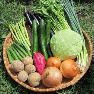 野菜セット 10種類 マルシェ愛媛 産地直送 一部地域送料無料