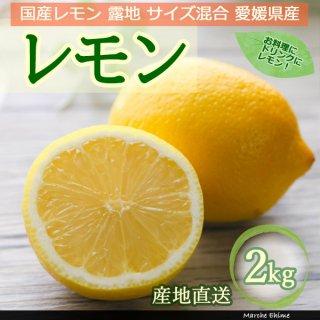 レモン 2kg サイズ混合 家庭用 露地 国産レモン スムージーにおすすめ 地域限定送料無料